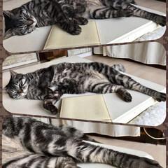 LIMIAペット同好会/ペット/猫/にゃんこ同好会/うちの子自慢 なんとも無防備な寝姿。 手足を投げ出し、…