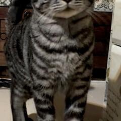 癒し/猫/LIMIAペット同好会/にゃんこ同好会/令和元年フォト投稿キャンペーン 今夜も私の帰りを待っていてくれた❤️ か…