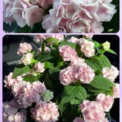 暑い1日/電動散布機/山紫陽花/母の日のプレゼント/令和の一枚/フォロー大歓迎/... 今日は暑い日でした💧 明日の母の日♥️ …