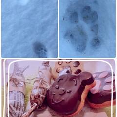 猫の足跡🐾/LIMIAペット同好会/猫/にゃんこ同好会/フード/スイーツ