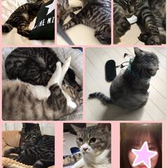 猫のいる暮らし/LIMIAペット同好会/ペット/猫/にゃんこ同好会/DIY/... 猫のいる暮らし… 何気ない行動が、癒しを…