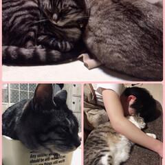 癒し/猫がいる暮らし/猫/ダイソー/100均/雑貨/... 癒される光景