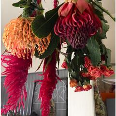 ピンクッション/薔薇/ケイトウ/ドライフラワー/住まい/暮らし/... 吊るし終えました。 綺麗な色だなぁ……(…