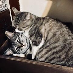仲良し猫親子/木箱DIY/DIY/ペット ぎゅうぎゅう詰め