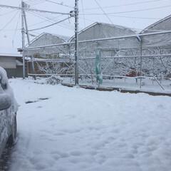 除雪の季節/雪の季節 嫌いな雪が降ってしまい… 昨夜から憂鬱に…