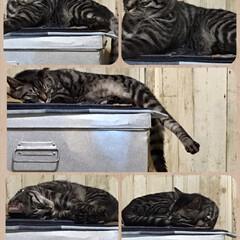 猫のお気に入り/デニムマット/角ブリキ缶/ブリキ缶/猫/リメイクシート/... 愛猫、まったり……。