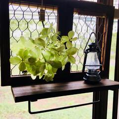 簡単くっつけるだけDIY/ミニランタン/キッチン窓/紫陽花ドライ/キッチン/雑貨/...