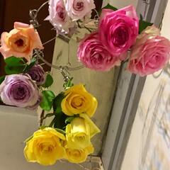 ドライフラワーのある暮らし/薔薇/暮らし バラを乾かしてます。 下から眺めるのが好…