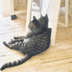 娘不在で家庭訪問💦/子供達はプチ旅行へ/猫と過ごす朝 毎朝、ご飯の後はここで過ごしているソラ。…