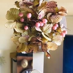 インテリアフック/ペッパーベリー/紫陽花ドライ/ポロポロ花材/セリア/100均/... リース作り等で花落ちした物で、簡単に。 …