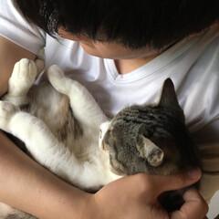 ペット/朝のひとコマ/令和元年フォト投稿キャンペーン/にゃんこ同好会/至福のひととき/暮らし/... おはようございます( * ॑˘ ॑*  …
