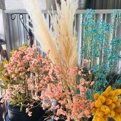 ドライフラワー/ブルーかすみ草/切り花染色剤/パンパスグラス/令和の一枚/至福のひととき/... 昨日花屋さんで見つけたパンパスグラス。2…