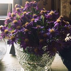 シオン/紫苑/リミアな暮らし/暮らし/ダイソー/欲求不満?! 妹から紫苑をもらいました( *´︶`*)…