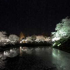 開花まであと少し/花筏/夜桜/LIMIAおでかけ部/おでかけ/風景 毎年夜桜を見に行っている城跡です。 フォ…