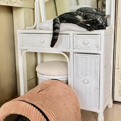 ペット/猫/100均/セリア/インテリア/DIY/... 置く場所が定まらずに、リビングに置いたま…