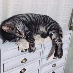 癒し/猫/ペット 仕事から帰ると、この寝姿。 癒しです。 …