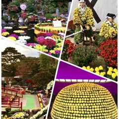 二本松の菊人形/おでかけ 毎年行っている福島県二本松の菊人形。フォ…