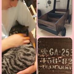 爪研ぎに悩む/ステンシル/簡単DIY/木箱でカートDIY/ペット/猫/... 帰宅後すぐにソラとまったりタイムの息子。…