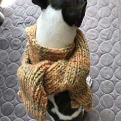 手編みマフラー/編み物 飼い主のマフラー