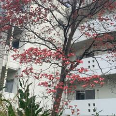 団地住まい/緑のある暮らし/いいねありがとうございます 団地に咲いた花  名前忘れた。