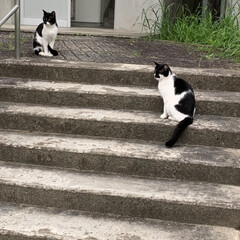 いいねありがとうございます 朝のさんぽをしたら、猫に遭遇🐈(2枚目)
