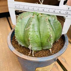 ハンドメイド/アンティーク/多肉植物 今日はいくつかの子達をリメイク鉢に植え替…(4枚目)