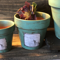 暮らし 昨日、作成した狐さんラベルの植木鉢です。…(2枚目)