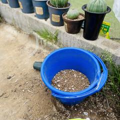 ハンドメイド/アンティーク/多肉植物 今日はいくつかの子達をリメイク鉢に植え替…(2枚目)