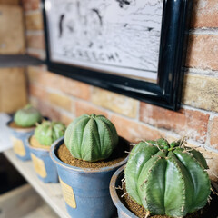 ハンドメイド/アンティーク/多肉植物 今日はいくつかの子達をリメイク鉢に植え替…(6枚目)