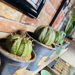 ハンドメイド/アンティーク/多肉植物 今日はいくつかの子達をリメイク鉢に植え替…(5枚目)