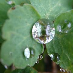 雨/滴/カバさん/編みぐるみ/ハンドメイド 雨降ってる。出始めた草に滴。久々に携帯用…
