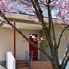 桜/新築/外観/玄関/桜風景/施工物件 先日お引渡ししたお客様から「家の前の桜が…
