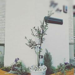DIY/エクステリア/門柱/プランター/花壇/グリーンガーデン/... 門柱前が寂しかったので、 木製プランター…