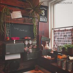 DIY ブラックアンドデッカー ダ.../植物が映えるものを作り隊 大好きな物を集めると…… わっさわさのD…