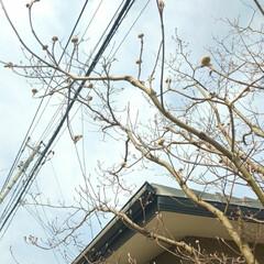 ハナミズキ/春の一枚 庭のハナミズキです💠  今朝は少し寒いの…