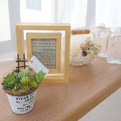 ナチュラルテイスト/フェイク多肉植物/出窓のある暮らし/インテリア マルシェで買った フェイク多肉植物の寄せ…