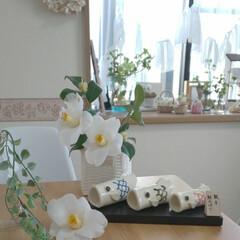 nagomiさんの作品/朝のダイニング/親子鯉のぼり/雑貨/インテリア/住まい/... 今日も暑くなりそうです☀️  白椿、ポト…