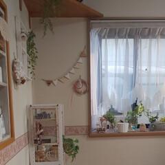 朝のダイニング/出窓のある暮らし/冬/おうち/ハンドメイド/キッチン雑貨/... 朝のダイニングです✨  今日も良いお天気…