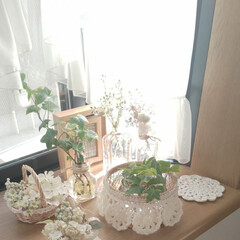 ナチュラルインテリア/出窓のある暮らし/雑貨/インテリア 久しぶりの朝陽でした✨  寒いけど良いお…