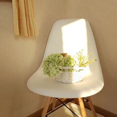 ナチュラルインテリア/フェイクフラワーアレンジ/白い椅子/朝陽/インテリア 今日も陽射しの強い朝です✨  白すぎて見…