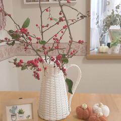 つる梅もどき/ハロウィン/かぎ針編みのかぼちゃ/雑貨/ハンドメイド 赤い実が可愛い つる梅もどきです🌿 かぎ…