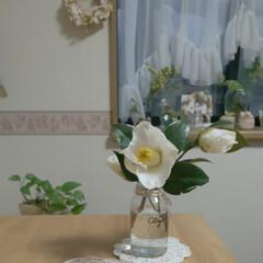 空き瓶再利用/白椿/インテリア 庭の白椿が咲き始めました✨  早速摘んで…