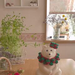 いちごの襟飾り/白くま貯金箱/雑貨/暮らし ちょっと季節を過ぎましたがいちごの襟飾り…
