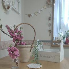 春/やまもも/出窓のある暮らし/ナチュラルインテリア/smileさんの木のボックス/雑貨/... 今日のやまもも💠  部屋に飾ると一気に開…