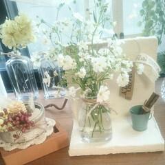 出窓/グリーン/インテリア 漆喰とかすみ草の窓辺💓