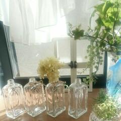 出窓/空き瓶再利用/グリーン/インテリア 朝陽がきらきら✨きれいです😊  瓶、たま…