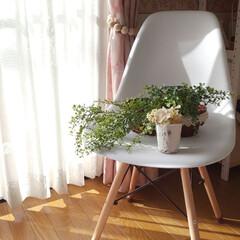 窓辺/白い椅子/いなざうるす屋さん/フェイクグリーン/インテリア 白い椅子とグリーン☀️😵💦  暑いのに暑…