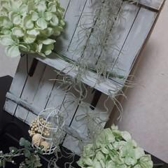 グリーン/フェイクフラワー/インテリア 花瓶から出したフェイク紫陽花です😃✨