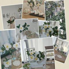 春/白椿アレンジ/白椿/インテリア/小さい春 白椿まとめです💠   今年もたくさん咲き…