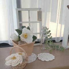 出窓のある暮らし/かぎ針編みのモチーフ/白椿/雑貨/インテリア 出窓のようすです✨  白椿が次々咲き始め…